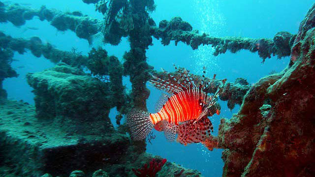 Labuan Wreck Diving