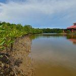 Kinabenuwa Wetland Mangrove Forest