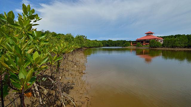 Kinabenua Wetland